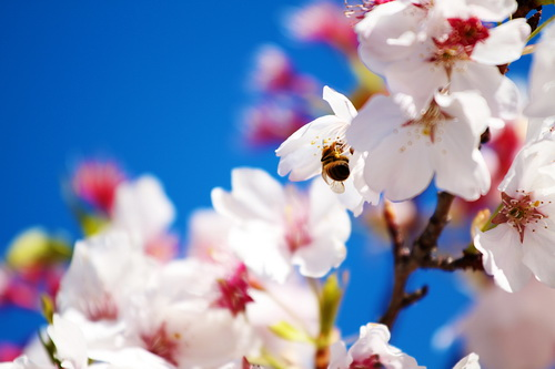 Пролетта доаѓа